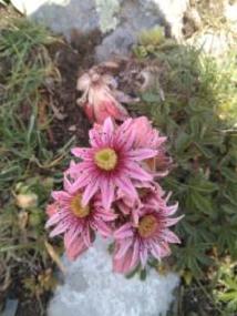 flora en sestrales