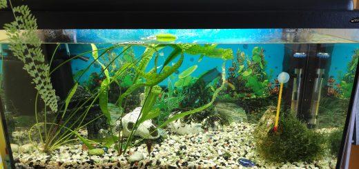 transporte de acuarios y peces
