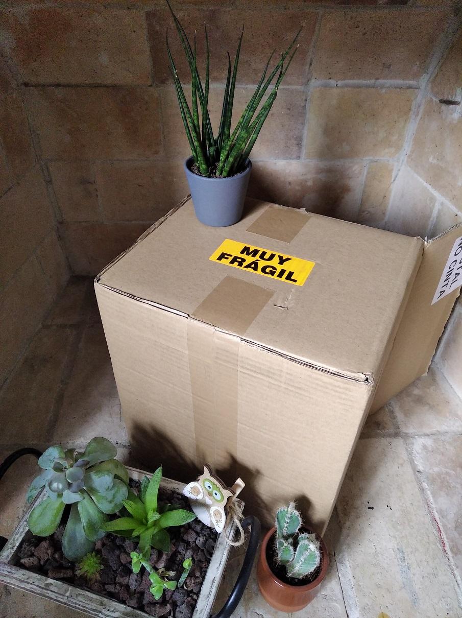 como transportar plantas
