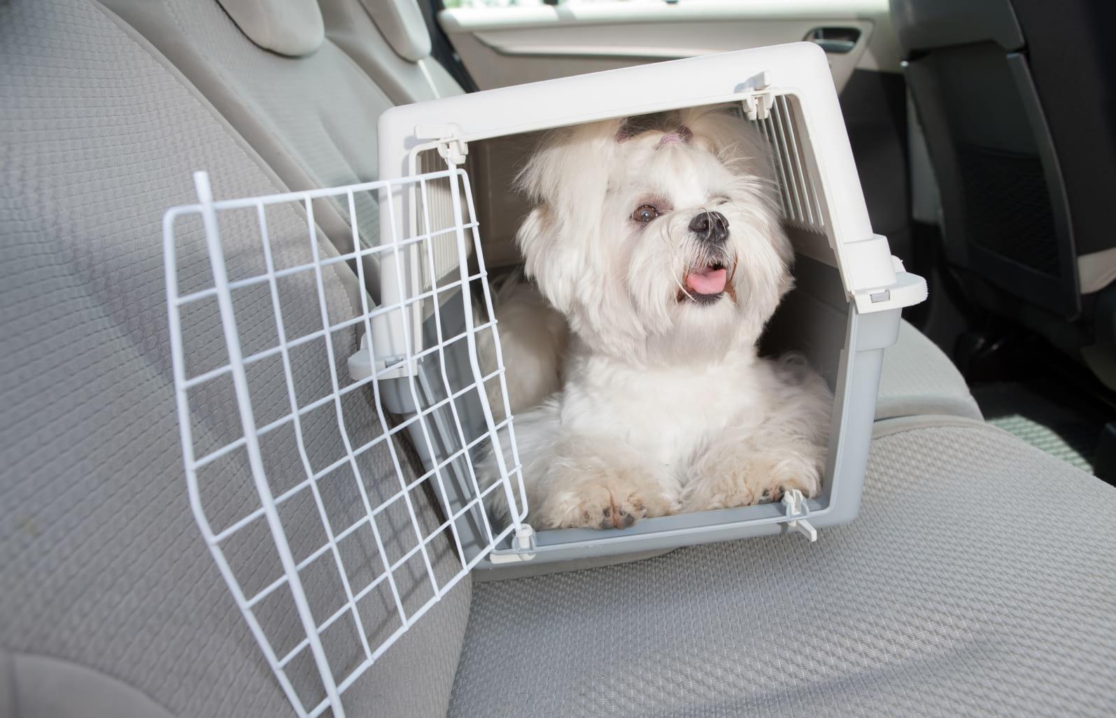 covid y transporte de mascotas